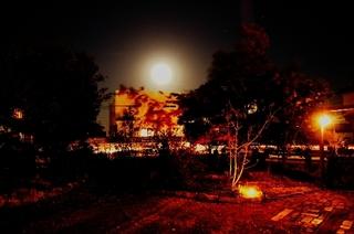 庭で月.jpg