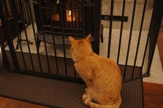 暖炉前で3.jpg