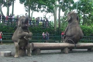 象のおすわり.jpg